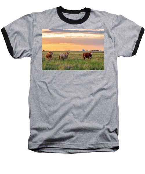 Sunset Cattle Baseball T-Shirt