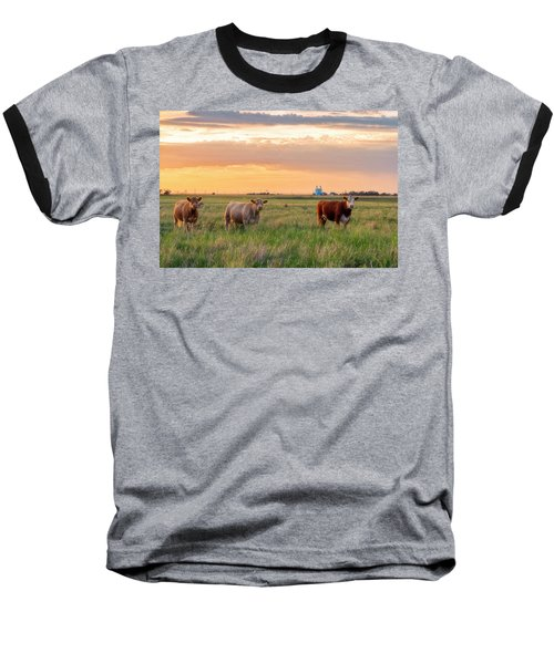 Sunset Cattle Baseball T-Shirt