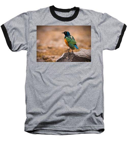 Superb Starling Baseball T-Shirt by Adam Romanowicz