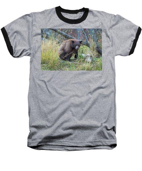 Surprised Bear Baseball T-Shirt by Scott Warner