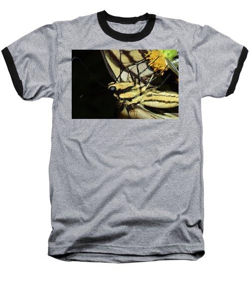 Swallowtail Butterfly Baseball T-Shirt