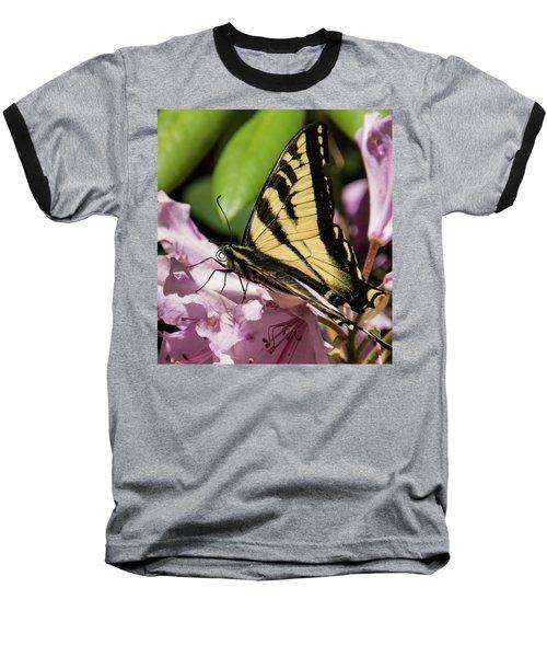 Swallowtail Butterfly Baseball T-Shirt by Marilyn Wilson