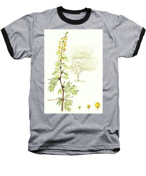 Baseball T-Shirt featuring the painting Sweet Thorn Botanical Illustration by Heidi Kriel