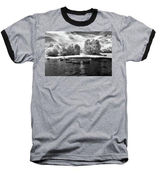 Swimming With Cows II Baseball T-Shirt by Paul Seymour