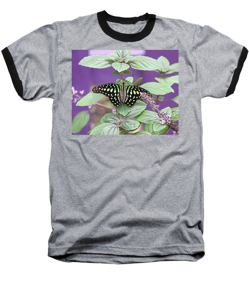 Tailed Jay Butterfly In Puple Baseball T-Shirt