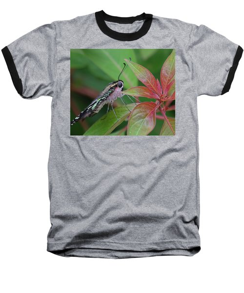 Tailed Jay Butterfly Macro Shot Baseball T-Shirt