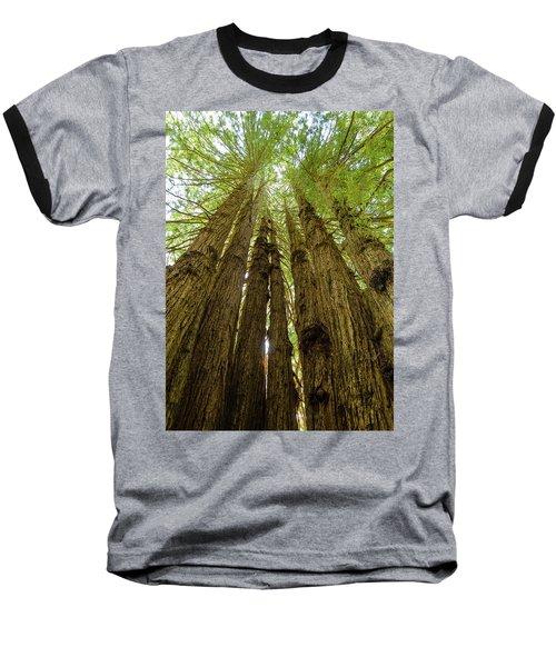 Tall Trees Baseball T-Shirt