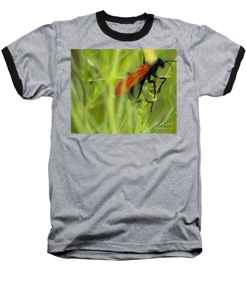 Tarantula Hawk 1 Baseball T-Shirt