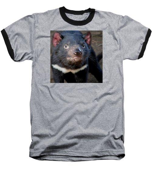 Tasmanian Devil Baseball T-Shirt by Greg Slocum