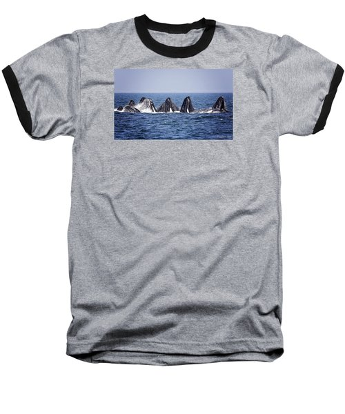 Ten Lunge Feeding Humpbacks Baseball T-Shirt