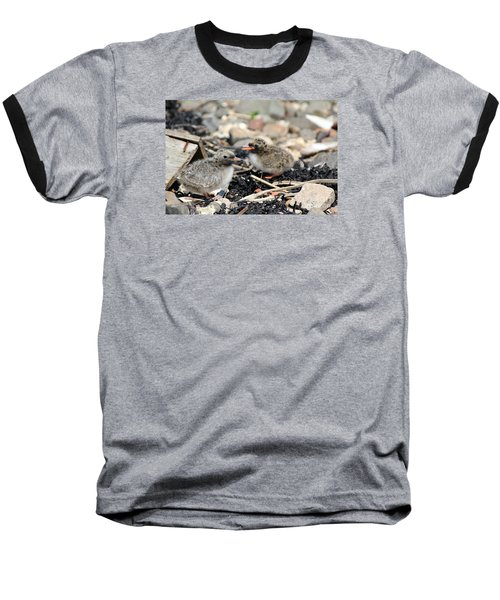 Tern Chicks Baseball T-Shirt by David Grant