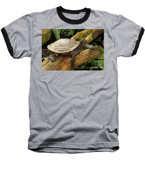 Tess The Map Turtle #3 Baseball T-Shirt