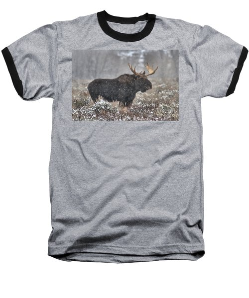 Baseball T-Shirt featuring the photograph Teton Snowy Moose by Adam Jewell