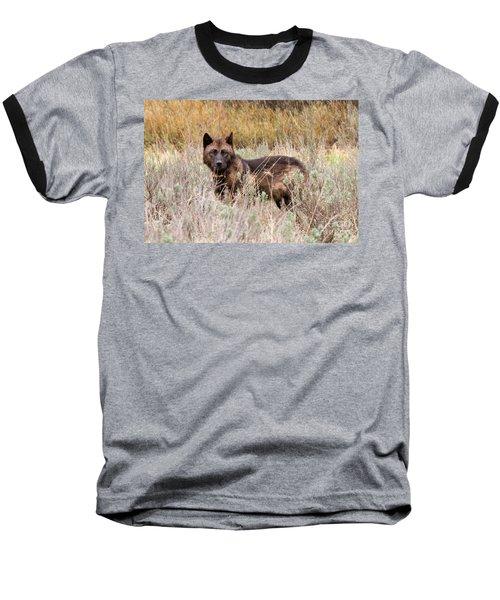 Teton Wolf Baseball T-Shirt by Steve Stuller