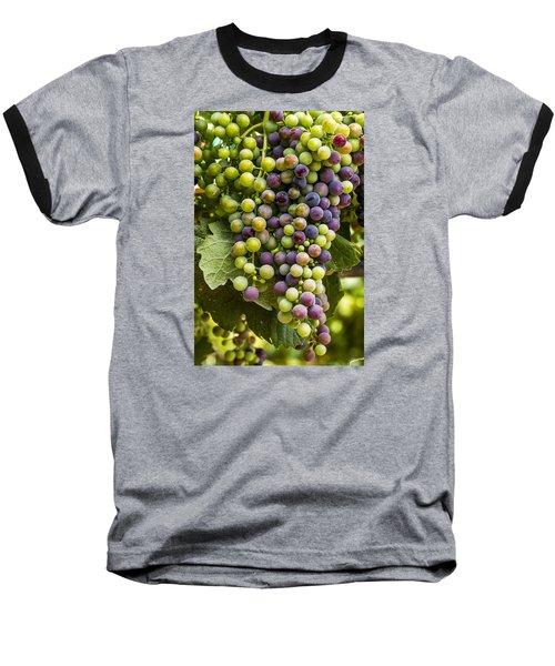 The Art Of Wine Grapes Baseball T-Shirt by Teri Virbickis