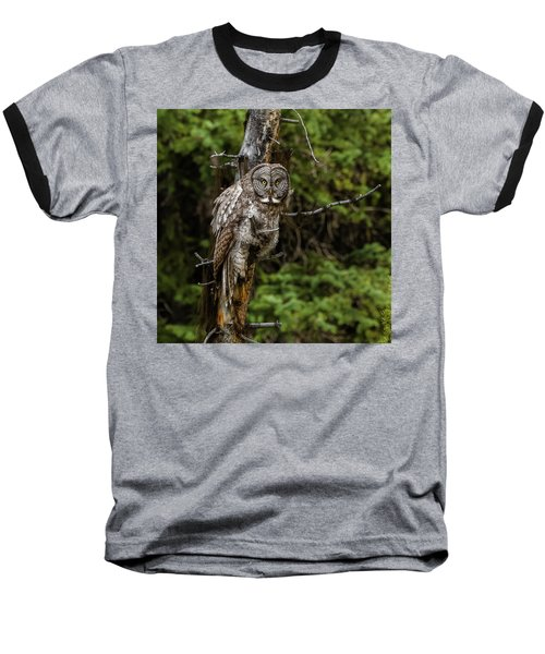 The Captivating Great Grey Owl Baseball T-Shirt by Yeates Photography