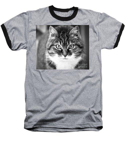 The Cat Stare Down Baseball T-Shirt