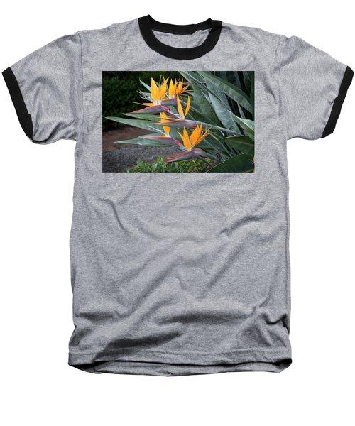 The Crane Flower - Bird Of Paradise  Baseball T-Shirt
