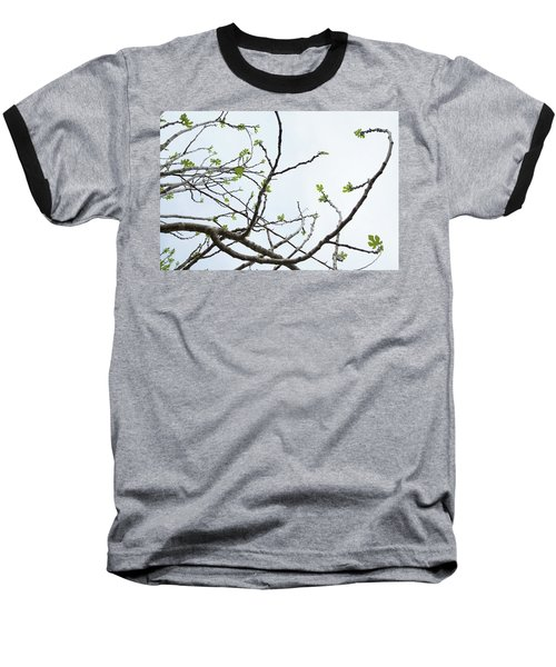 The Fig Tree Budding Baseball T-Shirt by Yoel Koskas