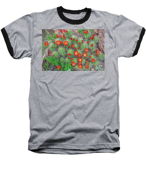 The First Week Of May, Claret Cup Cacti Begin To Bloom Throughout The Colorado Rockies.  Baseball T-Shirt