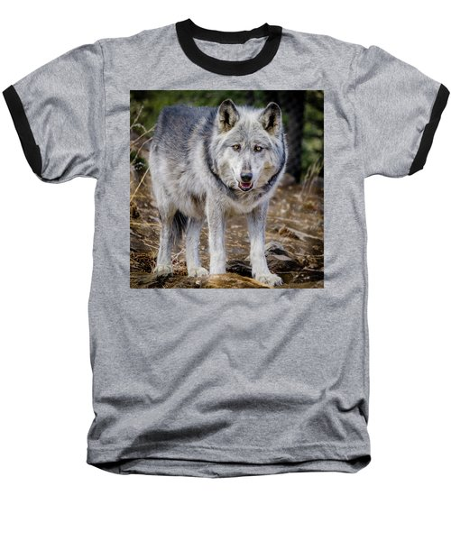 Baseball T-Shirt featuring the photograph The Great Gray Wolf by Teri Virbickis