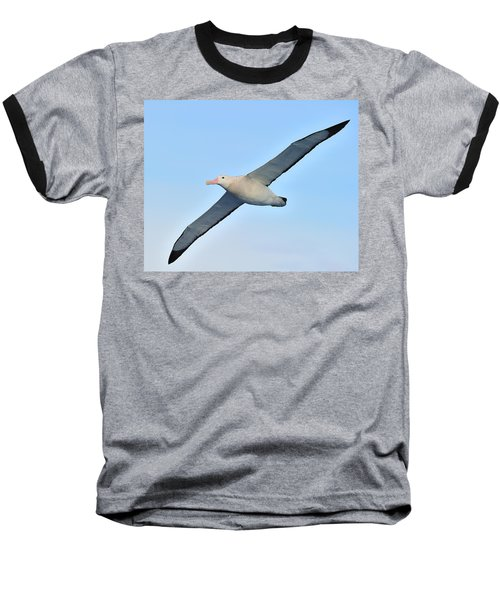 The Greatest Seabird Baseball T-Shirt by Tony Beck