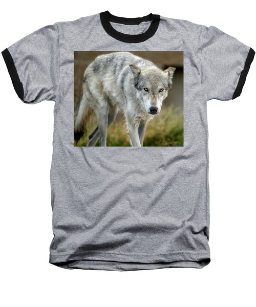 The Grey Wolf Shake Baseball T-Shirt