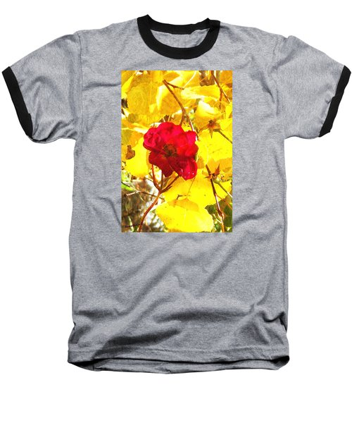 The Last Rose Of Autumn II Baseball T-Shirt by Anastasia Savage Ealy