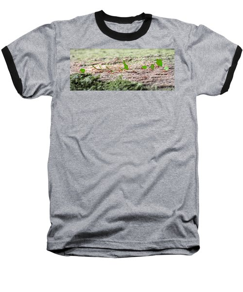 The Leaf Parade  Baseball T-Shirt by Betsy Knapp