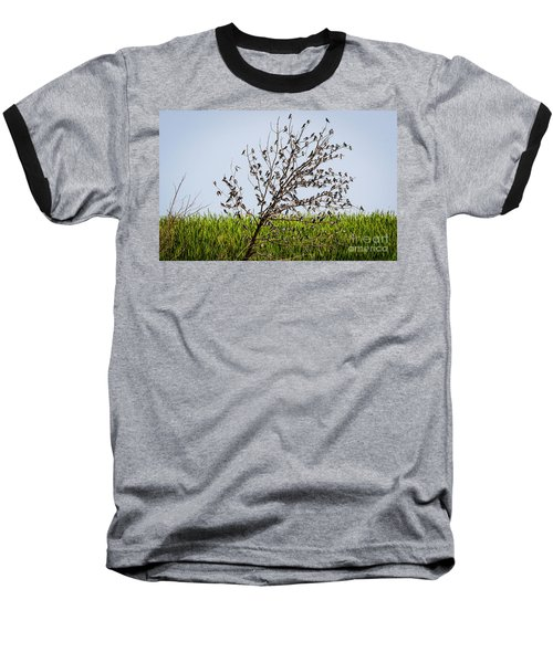 Baseball T-Shirt featuring the photograph The More The Merrier- Tree Swallows  by Ricky L Jones