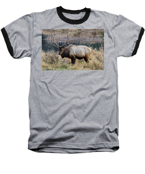 The Old Bull Baseball T-Shirt