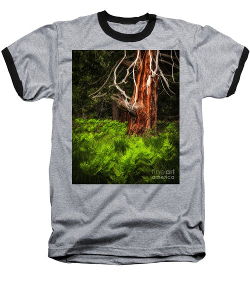 The Old Tree Baseball T-Shirt