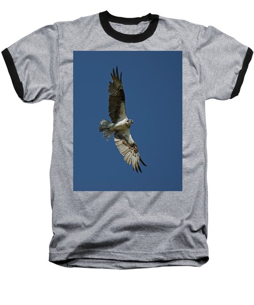 The Osprey Baseball T-Shirt