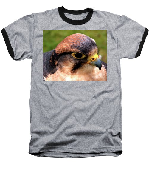 The Peregrine Baseball T-Shirt by Stephen Melia