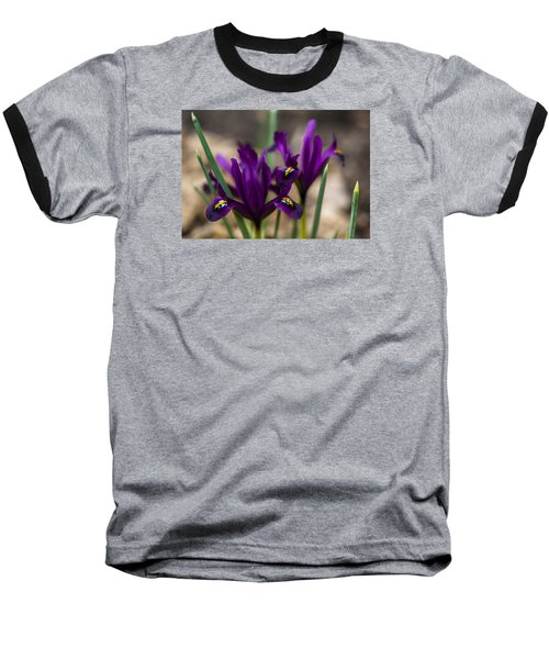 The Rise Of The Early Royal Dwarf Iris Baseball T-Shirt