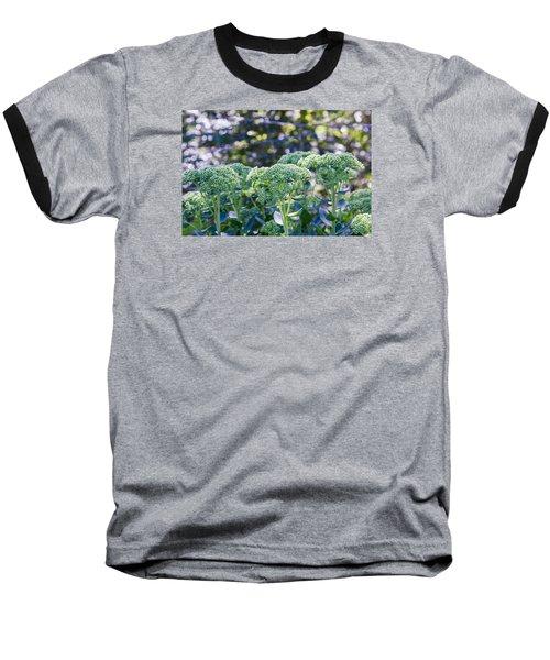 The Sedum Forest Baseball T-Shirt