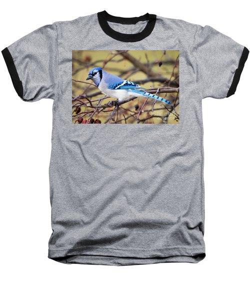The Winter Blue Jay  Baseball T-Shirt
