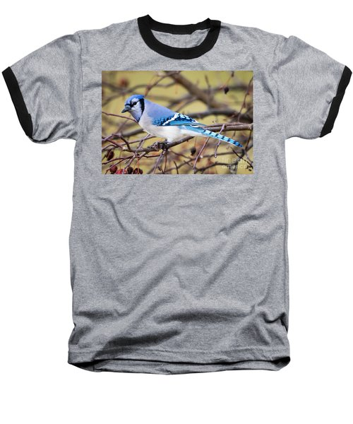The Winter Blue Jay  Baseball T-Shirt