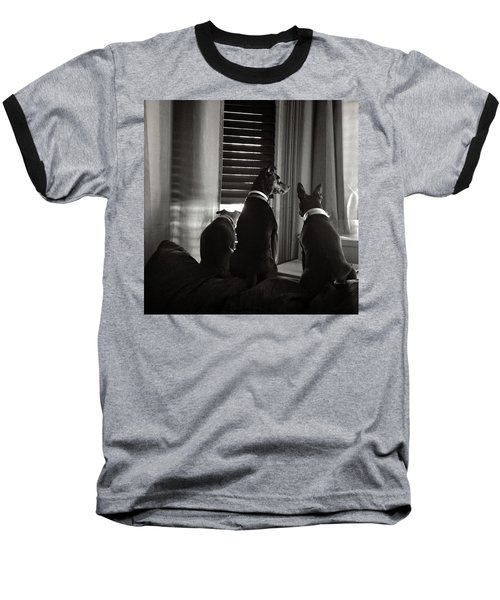 Three Min Pin Dogs Baseball T-Shirt
