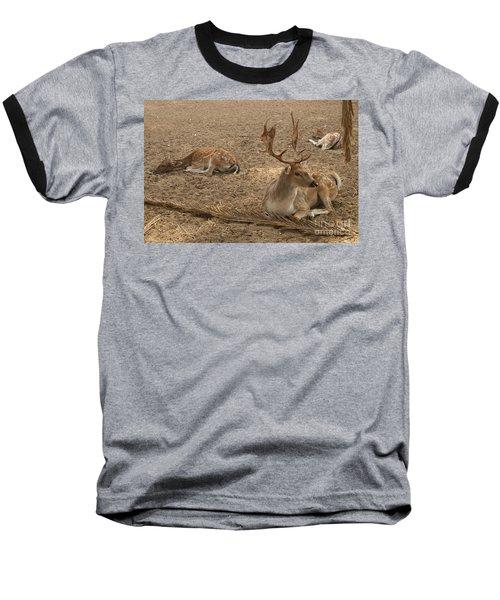 Three Deer Resting Baseball T-Shirt