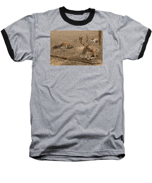 Three Deer Resting Baseball T-Shirt