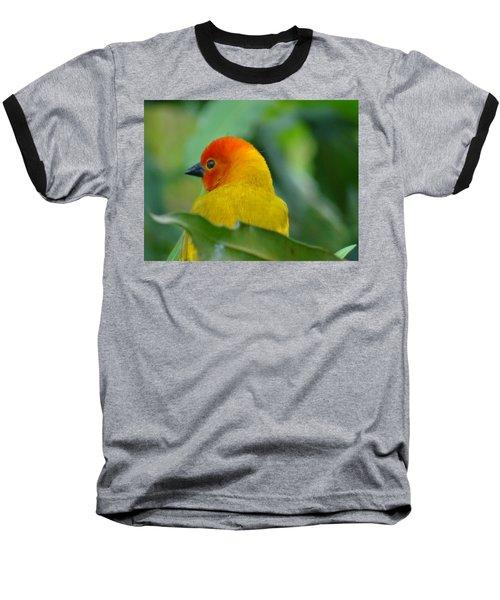 Through A Child's Eyes - Close Up Yellow And Orange Bird 2 Baseball T-Shirt by Exploramum Exploramum