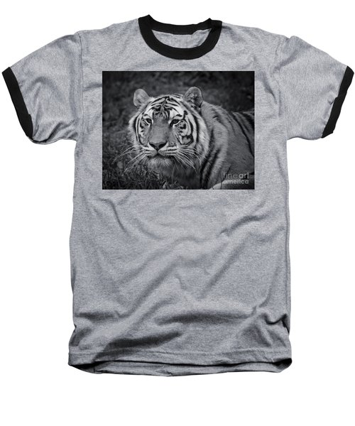 Tiger In The Grass Baseball T-Shirt by Darcy Michaelchuk
