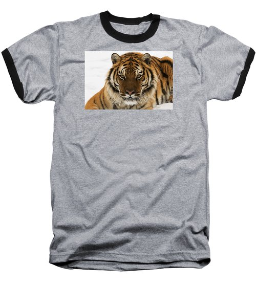 Tiger Stare Baseball T-Shirt