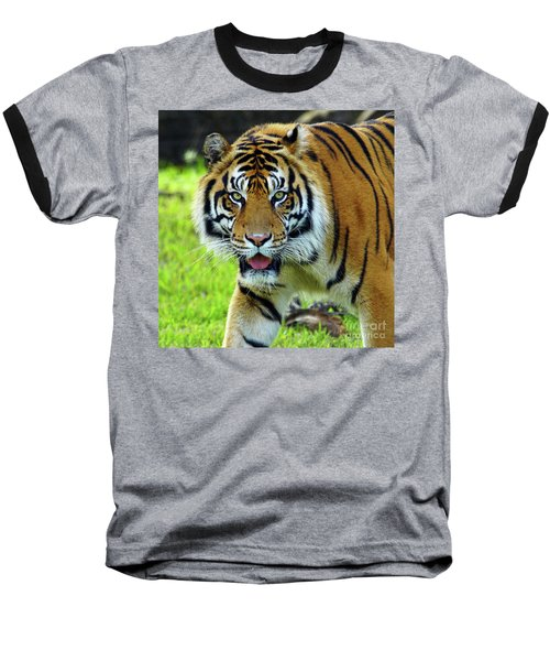 Tiger The Stare Baseball T-Shirt by Larry Nieland
