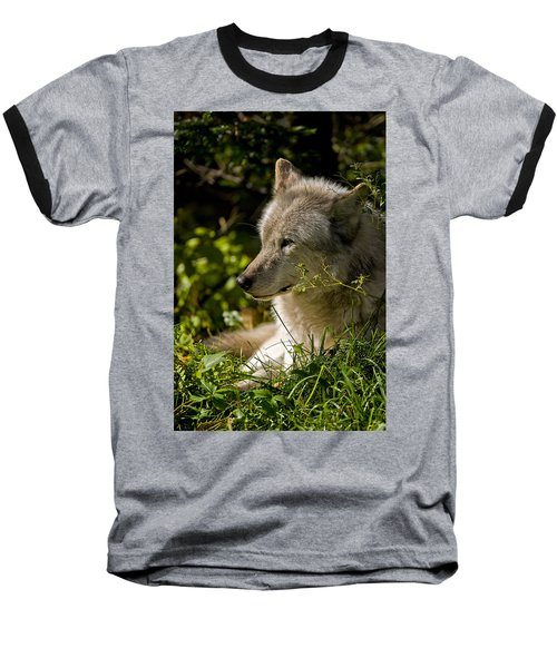 Baseball T-Shirt featuring the photograph Timber Wolf Portrait by Michael Cummings