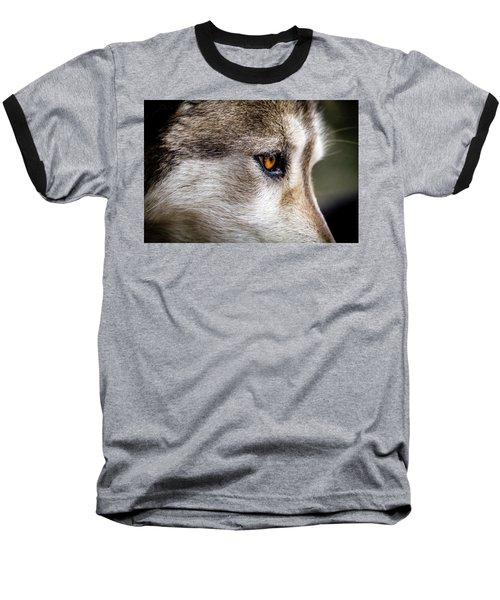 Baseball T-Shirt featuring the photograph Timber Wolf Stare by Teri Virbickis