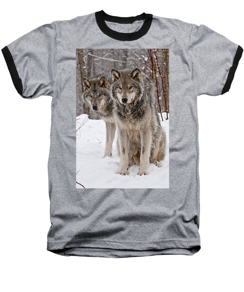 Timber Wolves In Winter Baseball T-Shirt by Michael Cummings