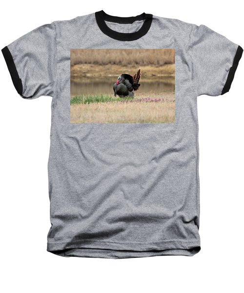 Tom Turkey At Pond Baseball T-Shirt by Sheila Brown