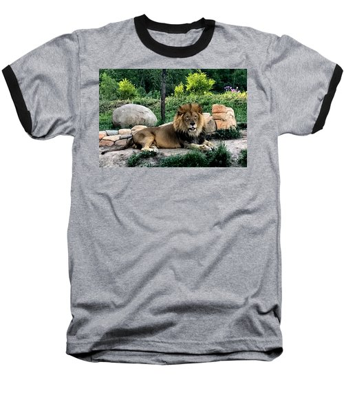 Tomo, The King Of Beasts Baseball T-Shirt by Laurel Talabere